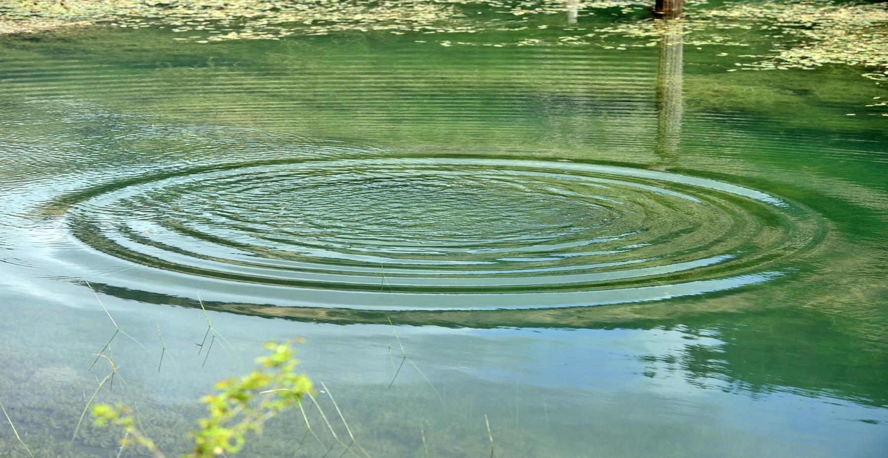 De watervriendelijke tuin blijft ook in het nieuwe jaar een belangrijk thema. Hoe integreren wij een goede waterhuishouding in onze tuinontwerpen?